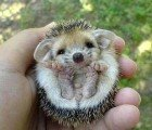 Hibernating is for Hedgehogs