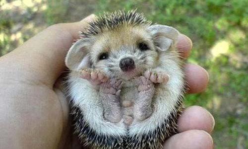 Hibernating is for Hedgehogs