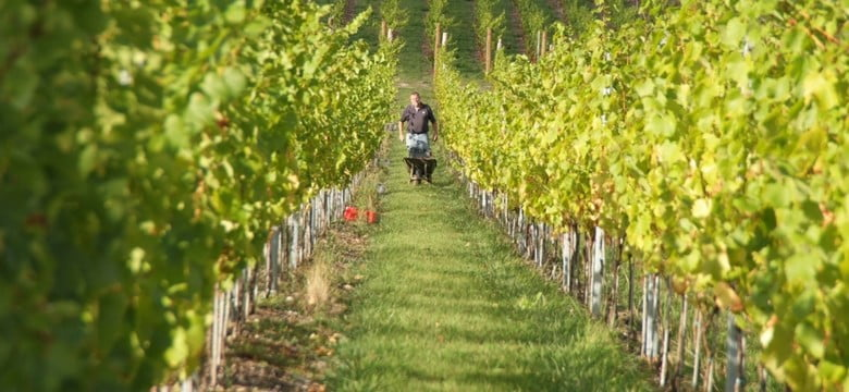 Surrey vineyard tours