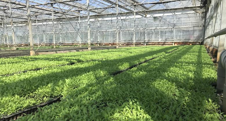 Secrett's Greenhouse